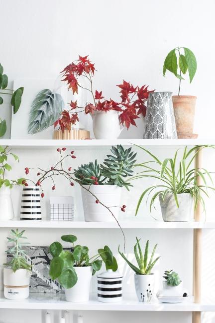 Décoration plantes étagères blanches
